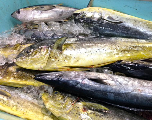 Finding sustainable seafood in fish dependent japan the for What does sustainable fish mean
